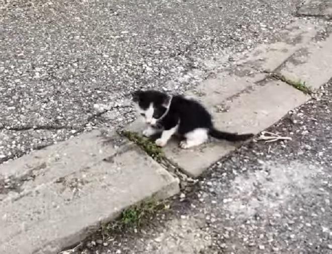 Черно-белый «сирота»: маленький котенок остался на улице совсем один, с инфекцией в глазу…