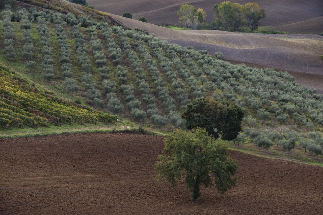 Тоскана, октябрь...