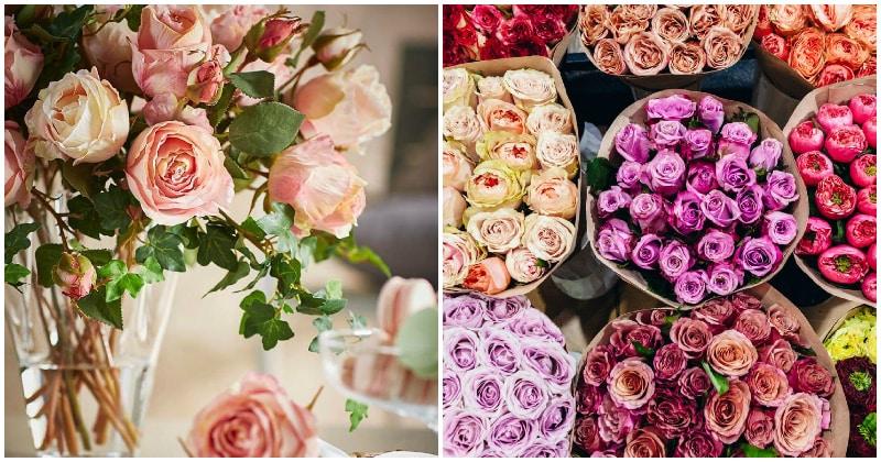 Неожиданное исследование: живые цветы — действенное средство для снятия боли и стресса
