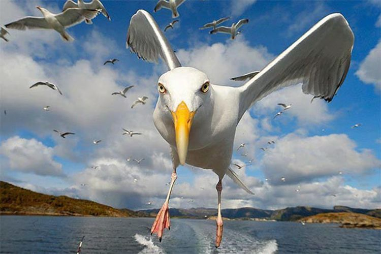 Изумительные фото снятые точно в идеальный момент животные, кадр, фото