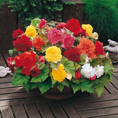 Настоящее украшение вашего сада