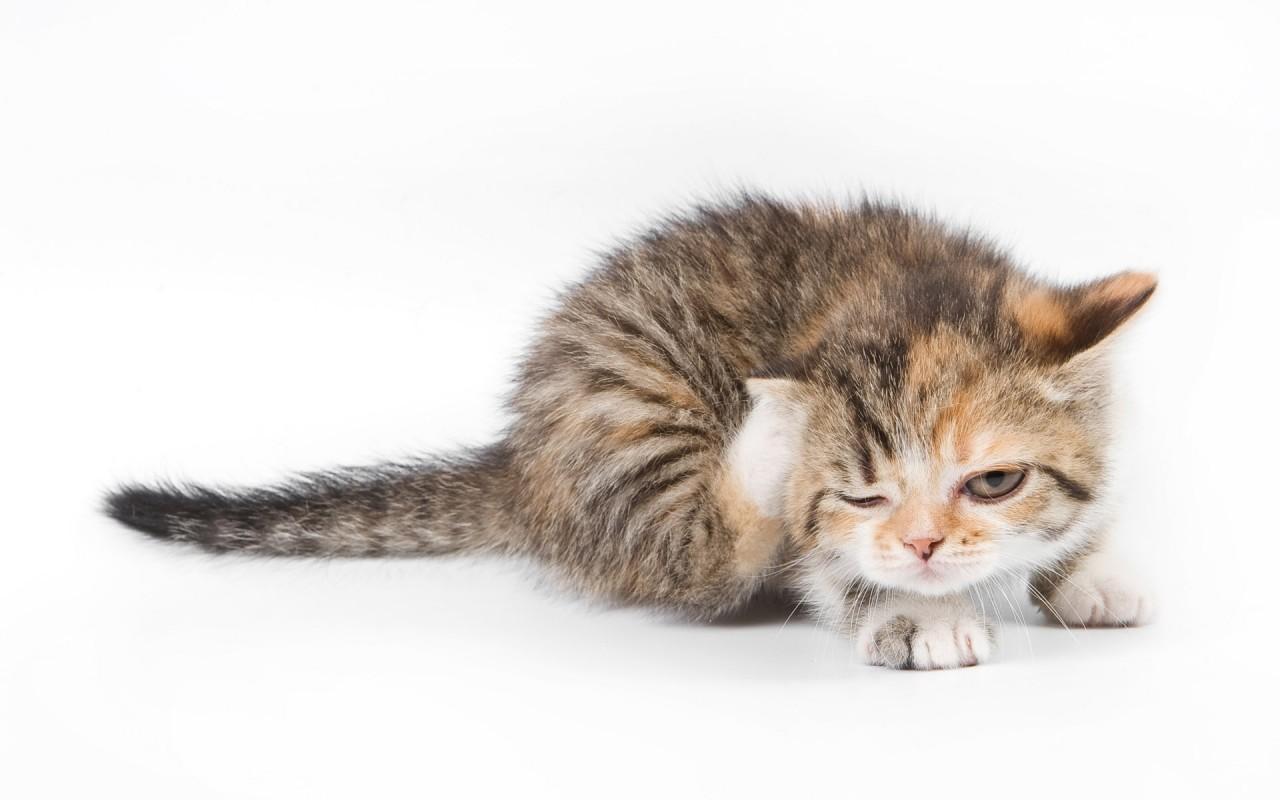 Средства против блох и клещей для кошек