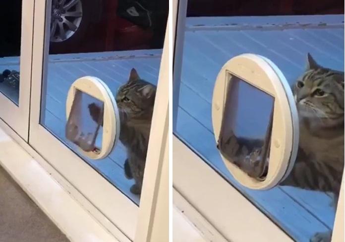 Толстый кот много лет притво…