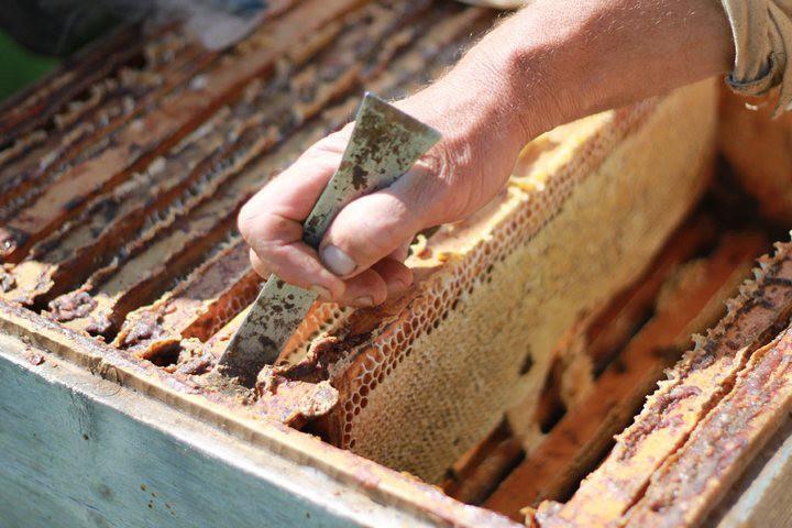 Как получают мёд еда, мёд