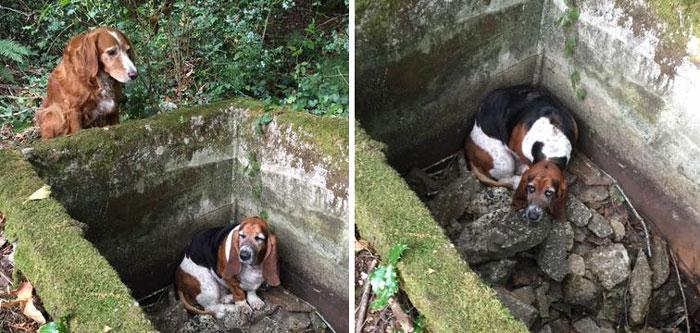 Беззаветная дружба: пока одна собака сидела в ловушке, вторая ни на минуту ее не оставила