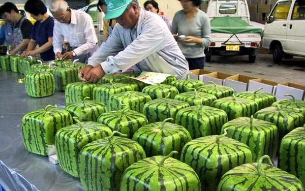 24 интересных факта о Японии