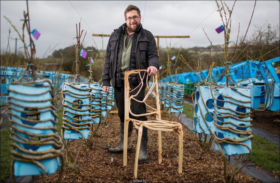 Британец выращивает мебель