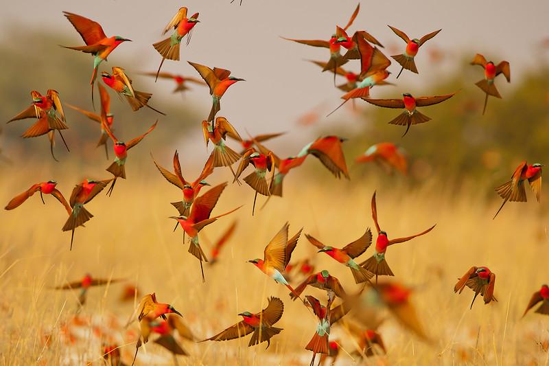 Красочный мир птиц