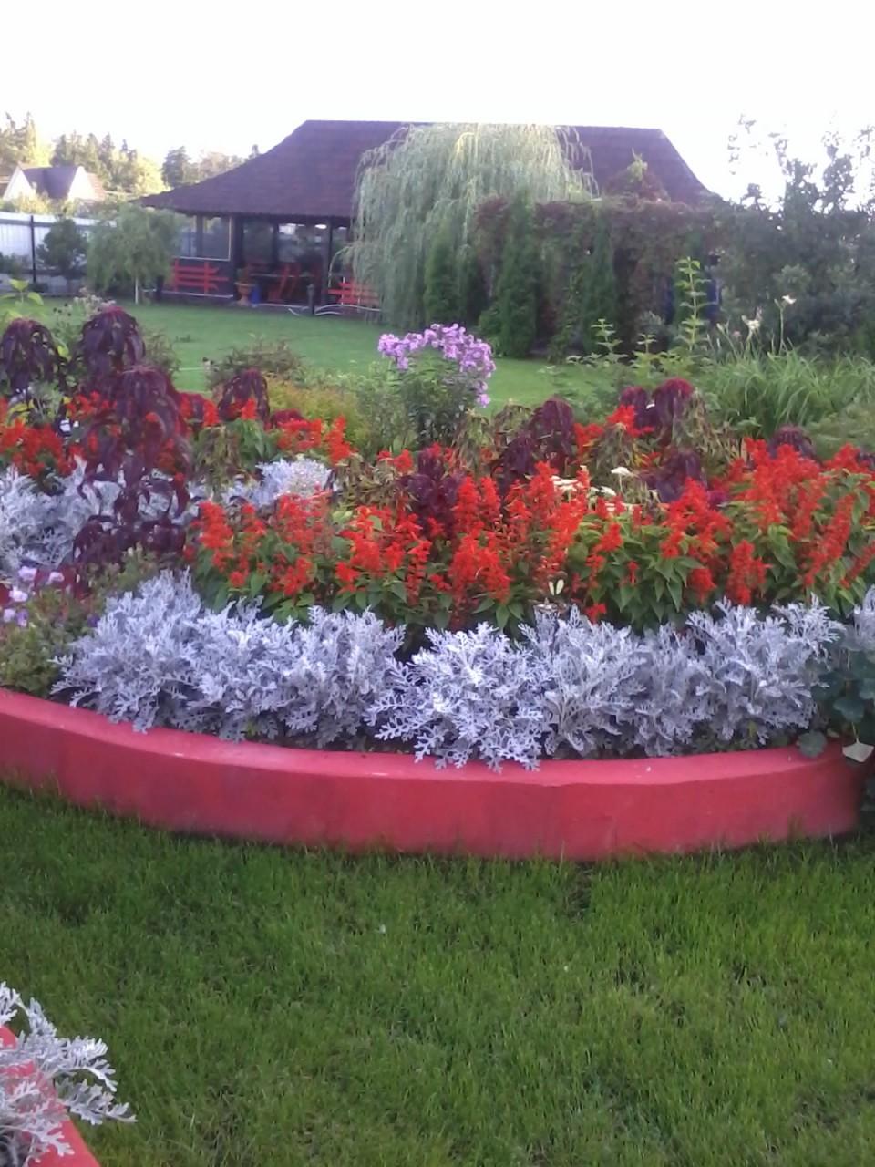 Засухоустойчивые цветы для клумбы на солнечном участке фото