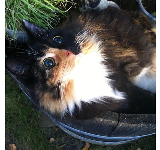 Это Жасмин, слепая кошка, увиденная в одном из приютов во Франции