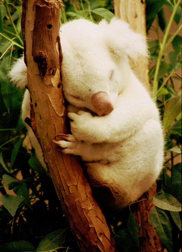 Животные – альбиносы