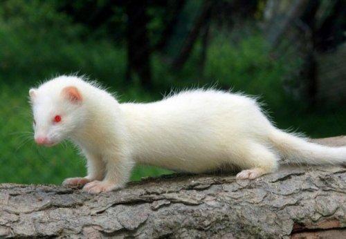 10 Увлекательных фактов о домашних животных