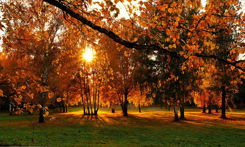 Осени пахнут листопадом
