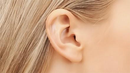 Питание для ушей