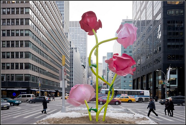 Розовые розы для зимнего Нью-Йорка