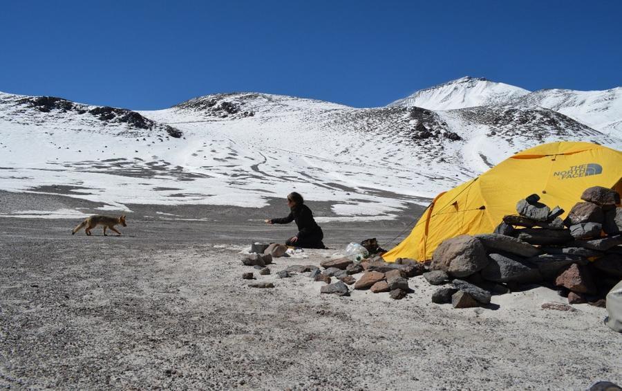 Чудеса природы: Вулкан Охос-дель-Саладо (9 фото)