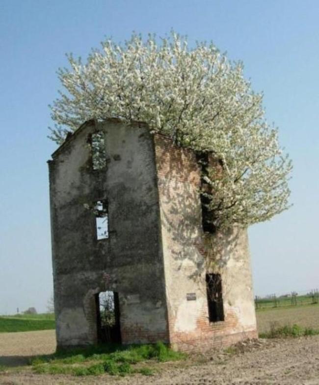 В здании растет дерево заброшенное, природа, разрушение, цивилизация