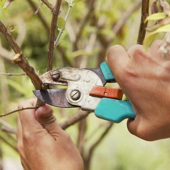 Виды и правила обрезки плодовых деревьев