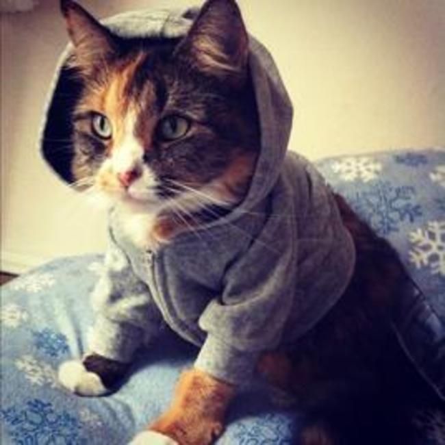 Котик в капюшоне  кардиган, кот