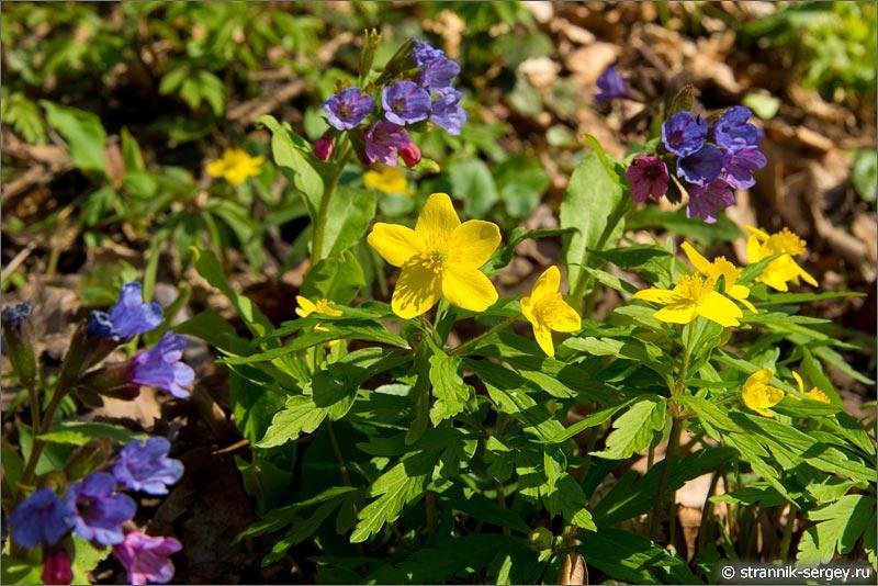 Не пропустите момент полюбоваться весенними цветами