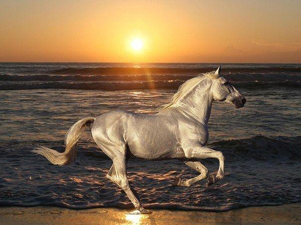 Изабелловая лошадь