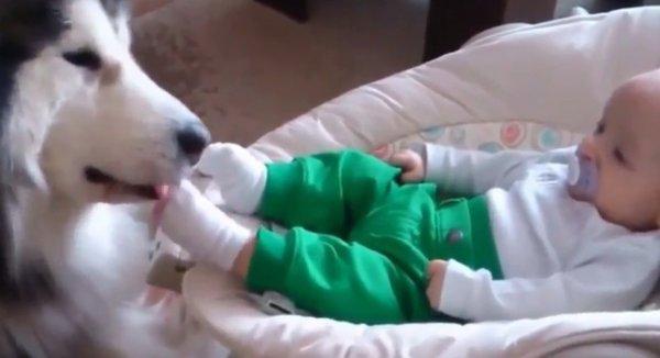 Дети и животные - видео для настроения