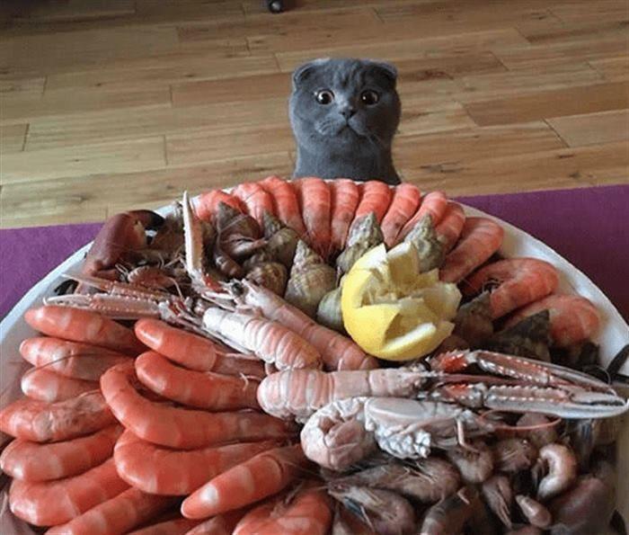 Коты, которые готовы на всё ради еды