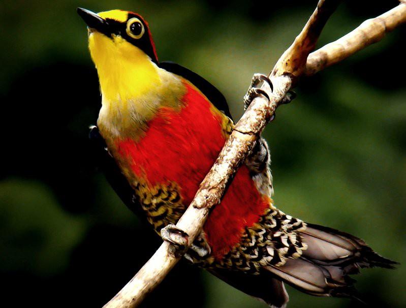 Птицы радуге сродни