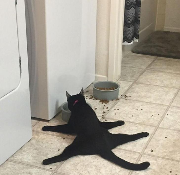 Смешные доказательства того, что у кошек отсутствует логика
