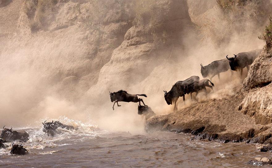 30 завораживающих фотографий миграции животных и насекомых