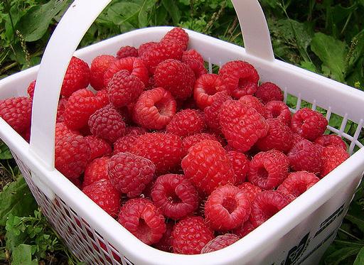 Еще раз о малине: секреты большого урожая