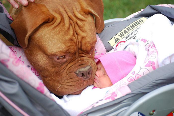 Первая встреча  дружба, ребенок, собака