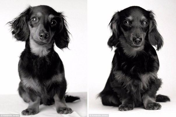 Жизнь собаки гораздо короче человеческой, но радость, которую наши любимцы животные, собаки
