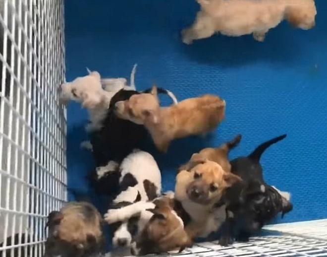 Десять крохотных щенков пытались выбраться из мешка, а рядом лежала их мама…