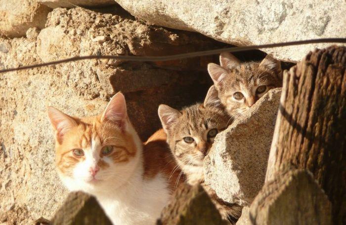 Эти разные кошки! 136 фото