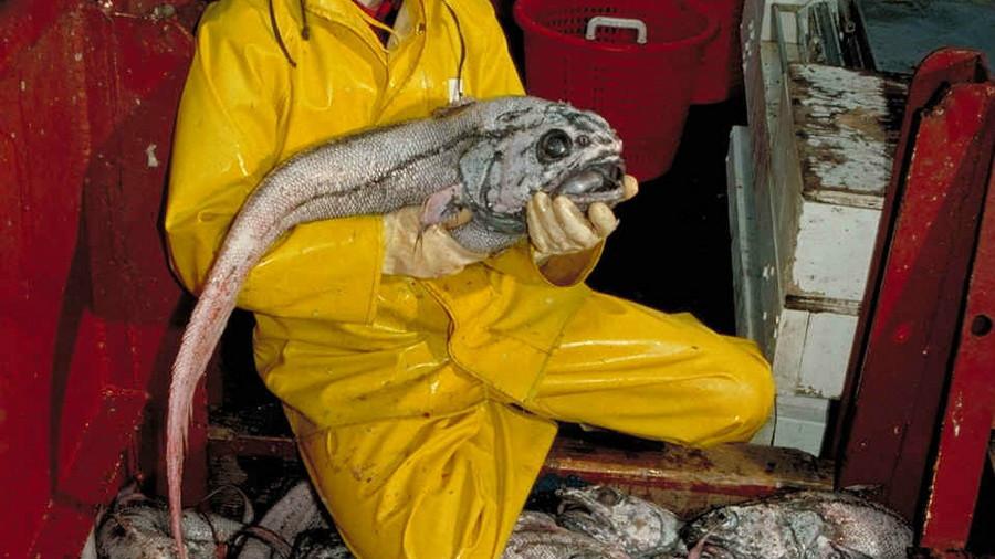 2. Гигантский макрурус. глубоководные рыбы, монстры, рыбы