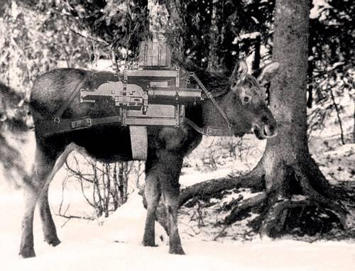 Как создавалась лосиная кавалерия война, факты, финская война