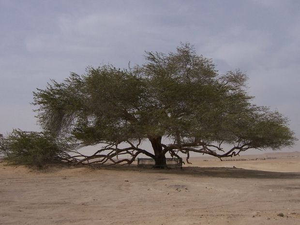 необычные деревья-10