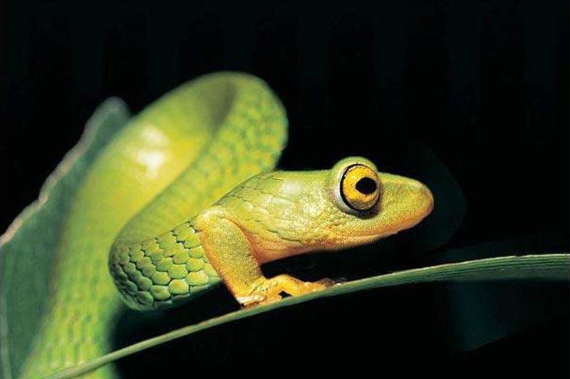 Почему змеи потеряли свои ноги