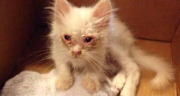 Спасенный котёнок удивил хозяев, став невероятно пушистым