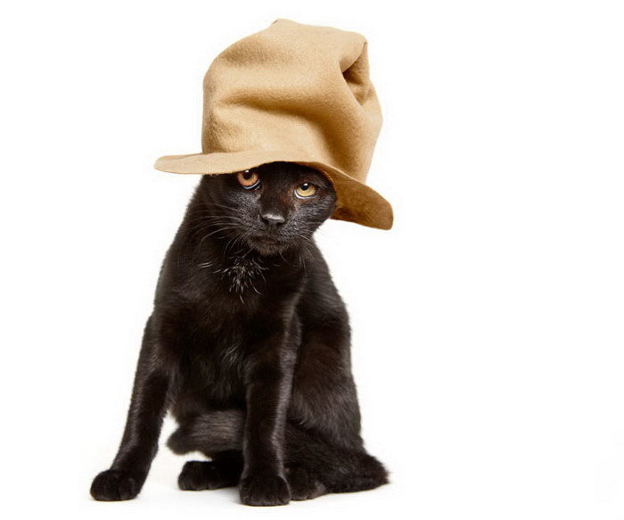 Чтобы кошек быстрее усыновляли