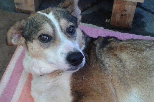 Собака без лап: шокирующая история человеческой жестокости и сострадания.
