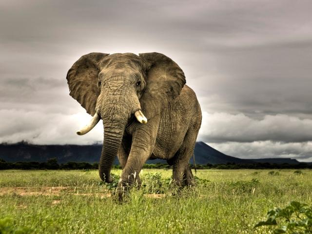 Топ 10 самые опасные животные в мире