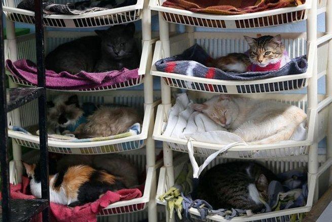 Хоспис для кошек