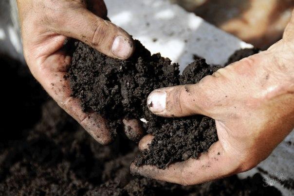 Почва просит кирпича