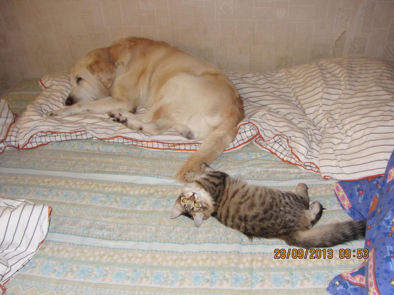 Сказывается уличное воспитание...:) коты, кошка