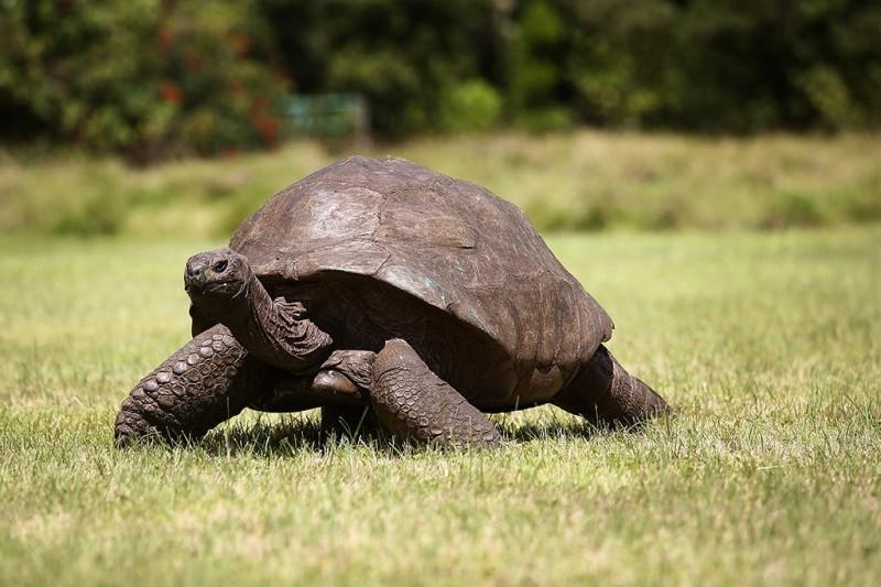 15 животных, которые старше, чем ваши бабушка и дедушка