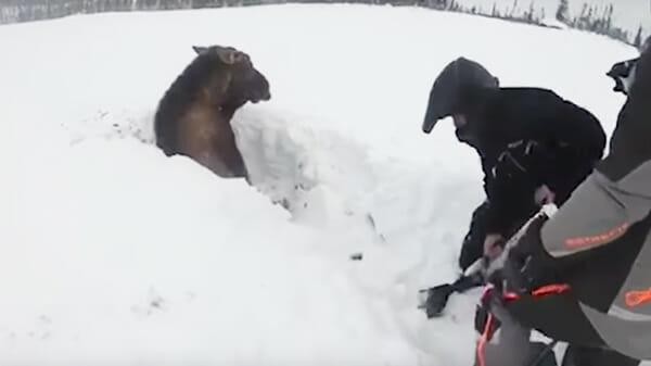 Ребята катались на снегоходах, внезапно они увидели что-то в снегу, приблизившись они онемели…
