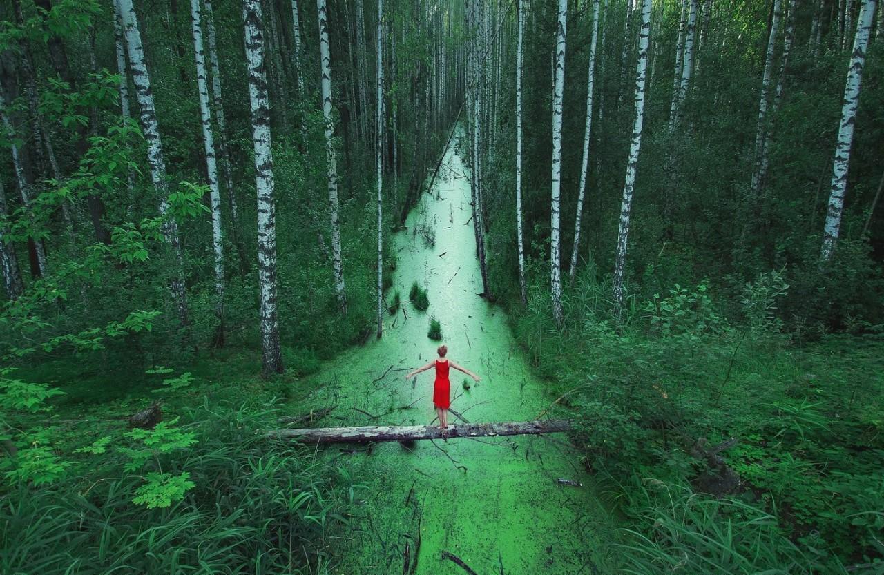 25. «Волшебный» лес в России. наш мир, удивительные фотографии