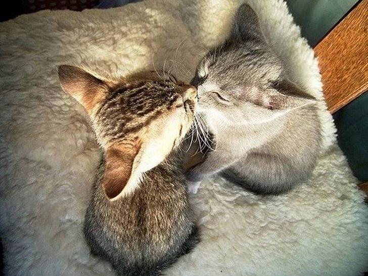 Синхронные коты